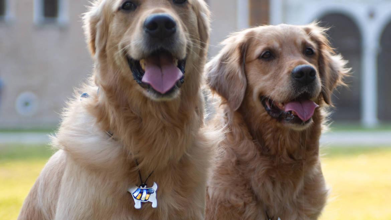 (Italiano) «DOGS & RUN» DEL 9 NOVEMBRE AVRÀ UNA SUA BELLISSIMA MEDAGLIA IN MOSAICO